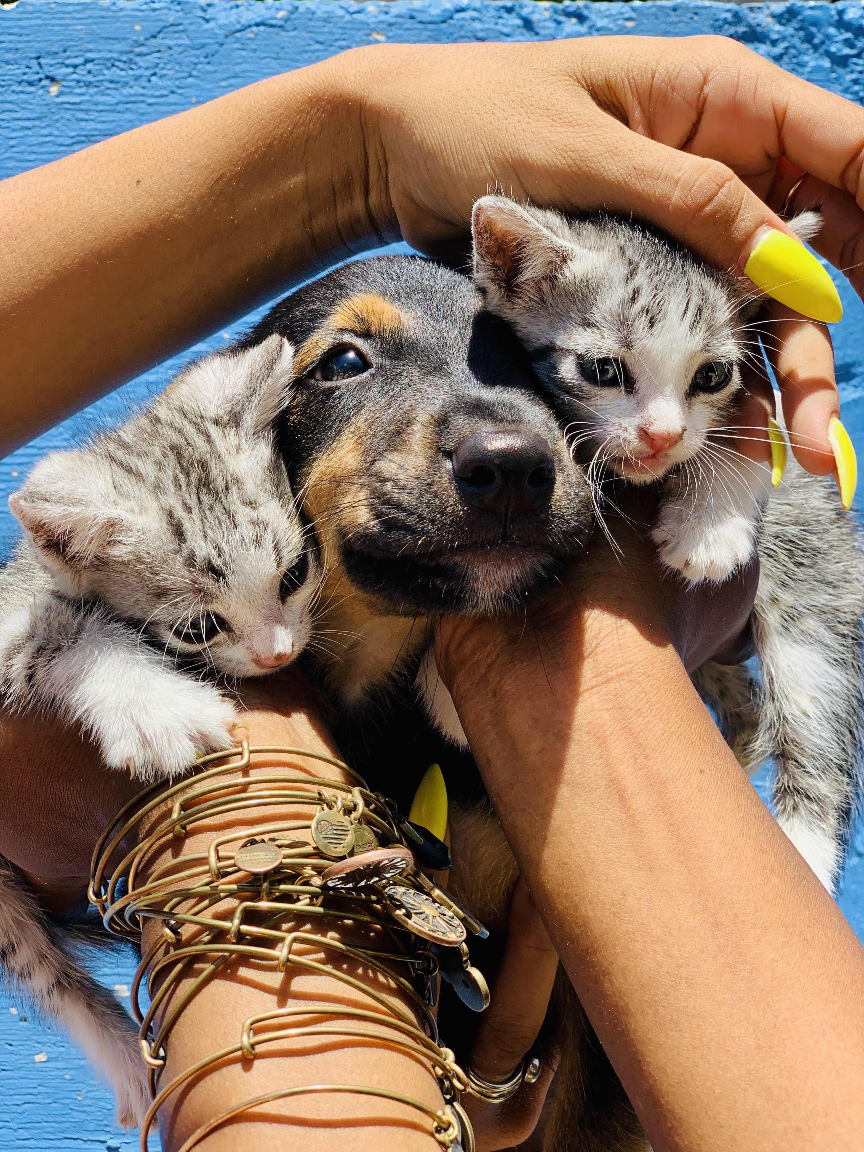 Two tabby kittens with a black puppy