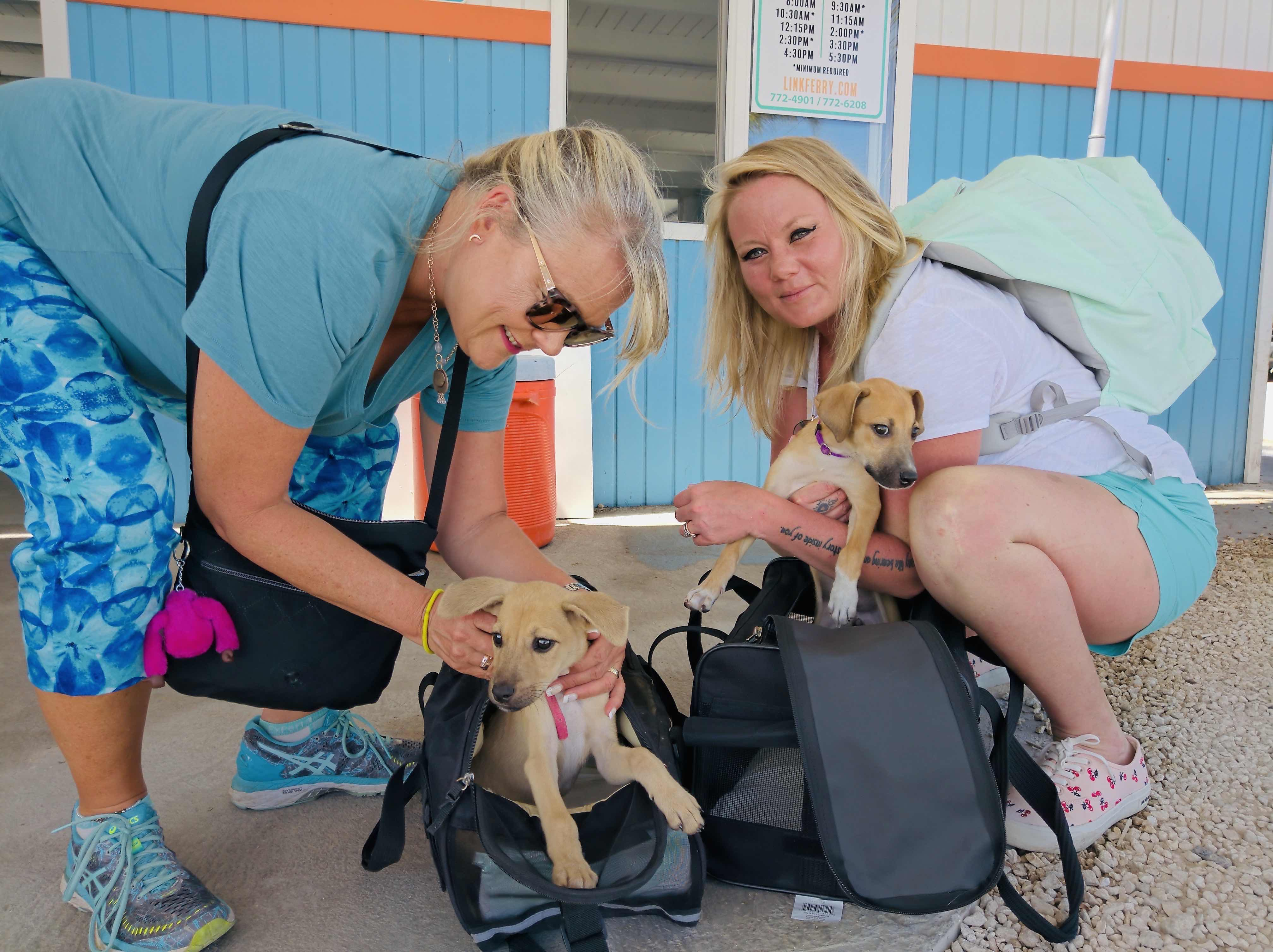 Two volunteers transporting puppies back to the USA from Anguilla